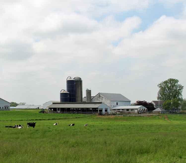 Meadow View K Farm Guesthouse, Lancaster PA
