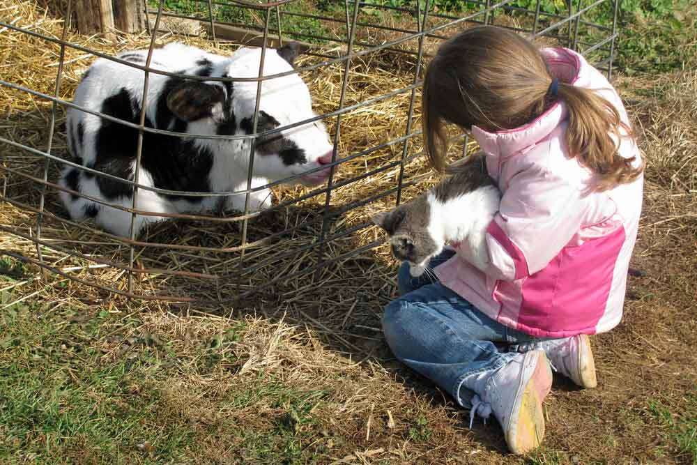Lancaster County fun farm stay for kids