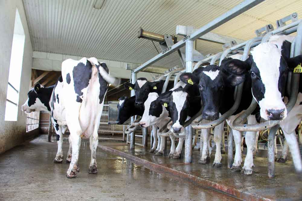 milking parlor at Meadow View K Farm Guest House